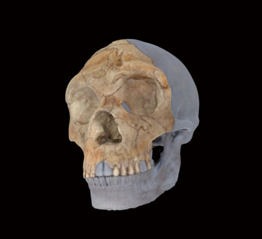 Example of 3D scan
